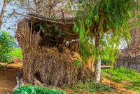 Exotic straw rocked hut and by tropical green trees and grass at traditional Egyptian village