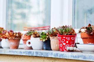 Aufgereihte Blumentöpfe auf einer Fensterbank