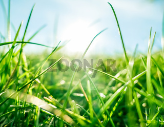 Fresh grass and sunny blue sky on a green field at sunrise, nature of countryside