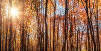 Sunlight Rays sunshine autumn natural background trees