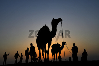 Camel rides in silhouette, SAM dunes, Jaisalmer, Rajasthan, India