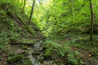 Todholz in der Wutachschlucht, Schwarzwald