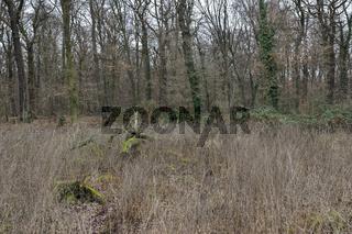 artenreicher Laubmischwald... Hambacher Forst *Nordrhein-Westfalen*