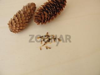 Zapfen und Samen der Blaufichte auf einem Holzbrett