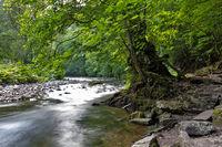 Wutachschlucht im Schwarzwald