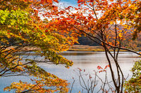 Colorful autumn foliage at Onuma Pond