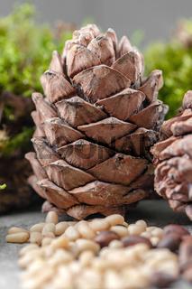 Cedar cone closeup on a gray background.