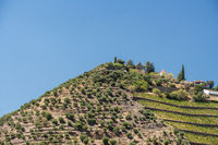 Terraced vineyard on the banks of the Douro river in Portugal