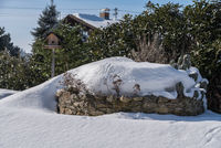 Kräutergarten mit Schneewehe bedeckt und Vogelhaus - Garten im Winter