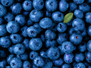 Blueberries in Color of Year 2020 Classic Blue