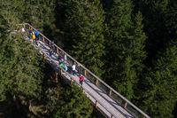Tree canopy walk, treetop walkway, footbridge through the forest, adventure in nature