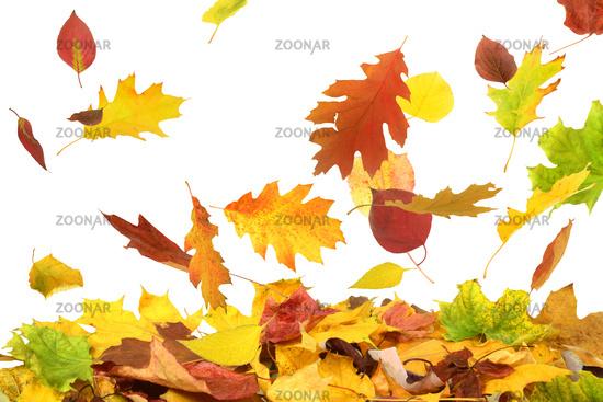 Herbst 48