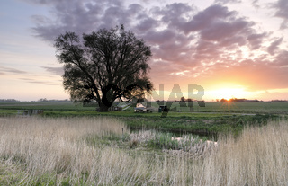 beautiful spring sunrise in countryside