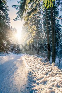 Winterwanderweg am Rennsteig
