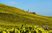 Weinberg in Herbstfarben,  Weinbaugebiet Fechy, Waadt, Schweiz