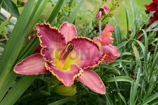 Blumen 400