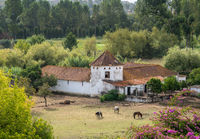 Old Portuguese riding stable with horse grazing the meadow