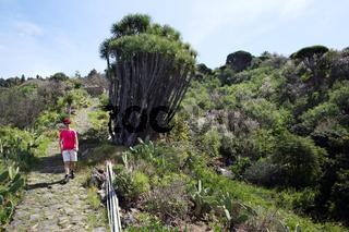 Wanderung bei Las Tricias