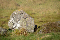 rock in the autumn meadow