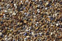 Muschelbank am Strand