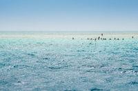Red sea White Island Sea Seashore Sharm el Sheikh, Africa Egypt.