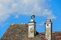 Weissstorch (Ciconia ciconia) steht auf einem Schornstein, Rust, Burgenland, Österreich