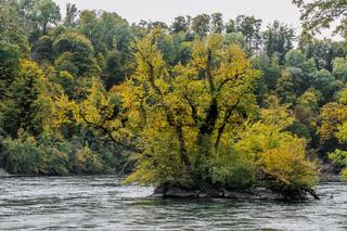 Herbstbeginn am Hochrhein bei Schaffhausen, Schweiz