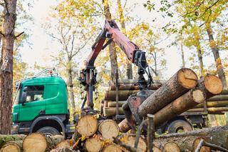 Forwarder beim Verladen von Baumstämmen