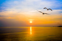 Pair of seagulls in sky at sunset in Bang Pu, Thailand