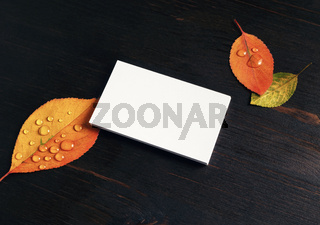 Blank business card, leaves
