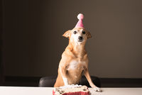 Portrait Of Dog With Birthday Cake On Table At Home