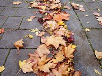 Fallen leaves lying on the paved surface