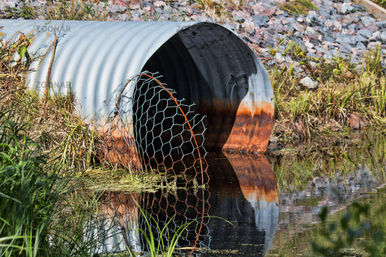 Pipe and mesh that recovers the penetration of beavers