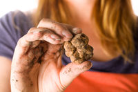 White truffle (tuber magnatum) in woman hand isolated on white.