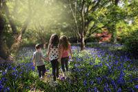 children walking hand in hand through bluebell woods