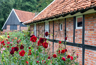 Old Dutch farmhouse and shed surrounded by dahlia flowers