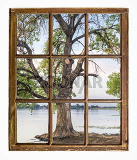 cottonwood tree on a lake beach