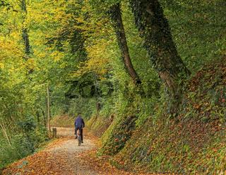 Herbstwald  am Hochrhein bei Schaffhausen, Schweiz