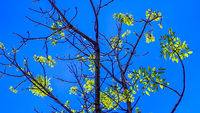 Green Leaves and Branches Over Blue Sky Background