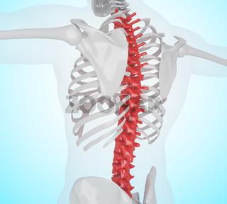 3d illustration of Human skeleton back pain