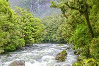 Südbuchenwald am Lake Gunn auf der Südinsel von Neuseeland