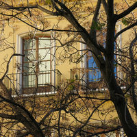 Branches of a tree and windows.