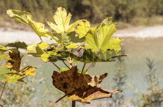 Herbstlaub im Flusstal