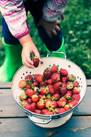 Kid taking a fresh strawberry from bowl of fresh fruits sprinkled raindrops over wooden table