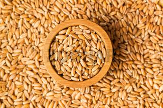 Healthy spelt grains.