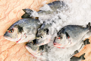 Group of saltwater fishes on ice at marble
