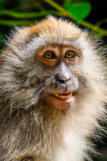 Portrait of a friendly looking monkey