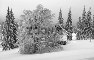 Vogland im Winter - Das Haus hinter den Baeumen