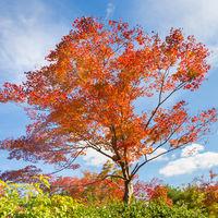 Colorful autunm tree.