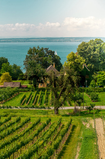 Curtural landscape with fruit plantation near Hagnau at lake Constance (Germany)